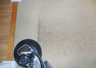 This carpet was cleaned in Harleysville, PA.