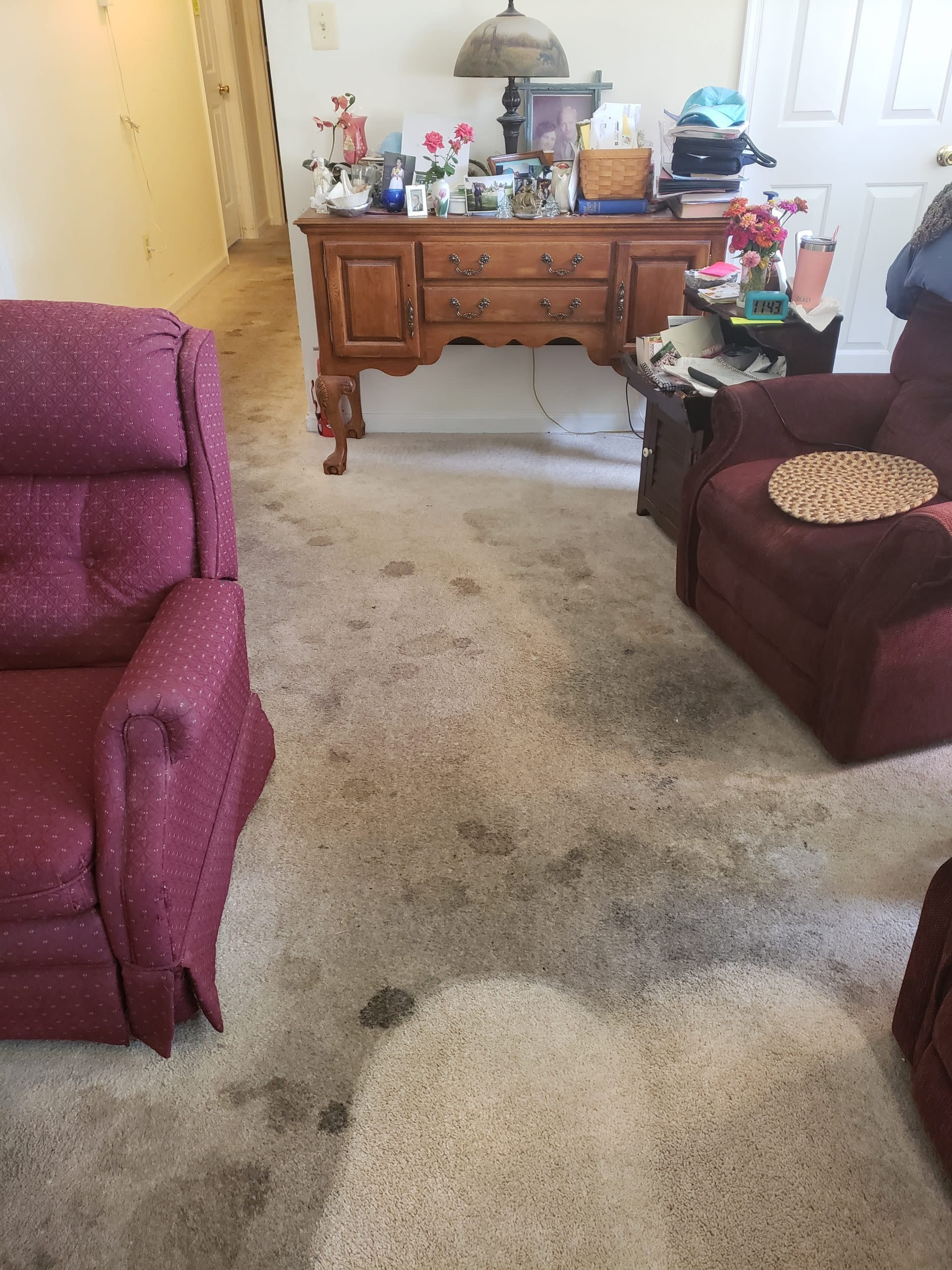 Living room with pet stains