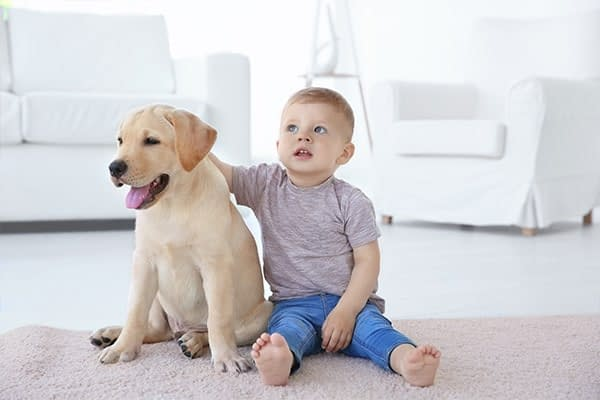 boy and dog on clean carpet