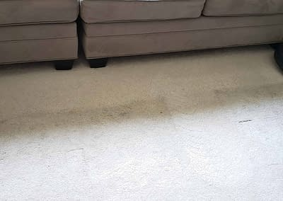 Family room carpet cleaned in Ambler, PA