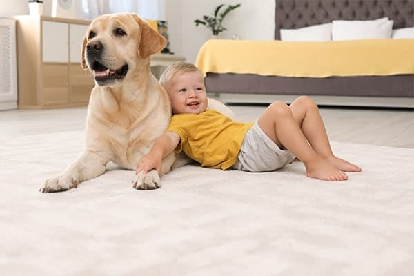 carpet smells from dog and boy