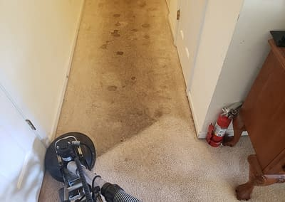 Dirty hallway with pet stains partially cleaned