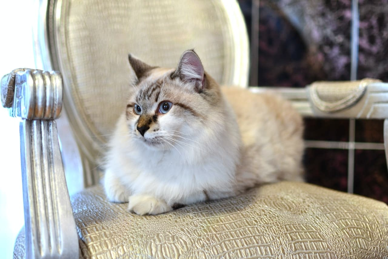 A cat sitting on a chair