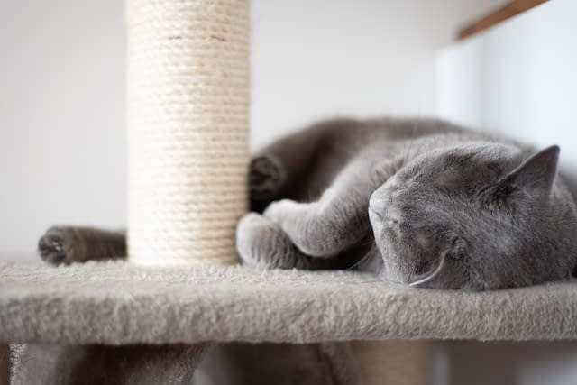 Cat sleeping on a scratching possition