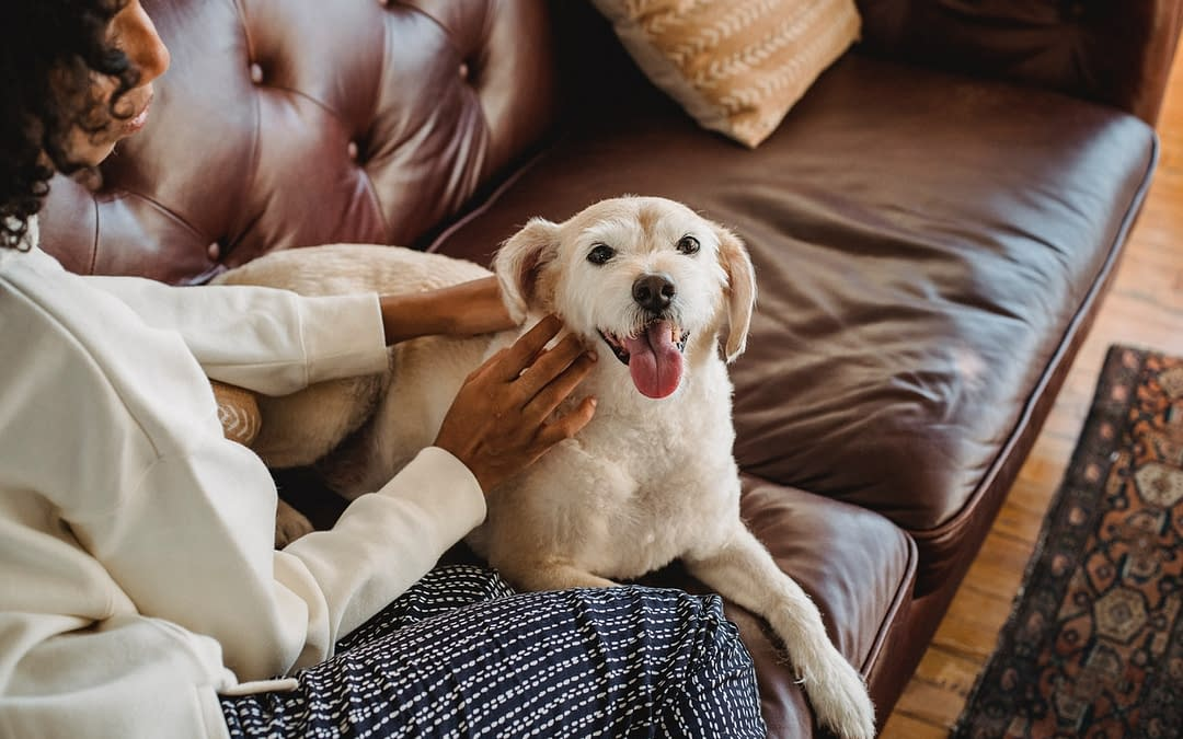 Woman cuddling a dog on a couch