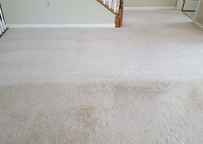 Telford, PA carpet cleaning